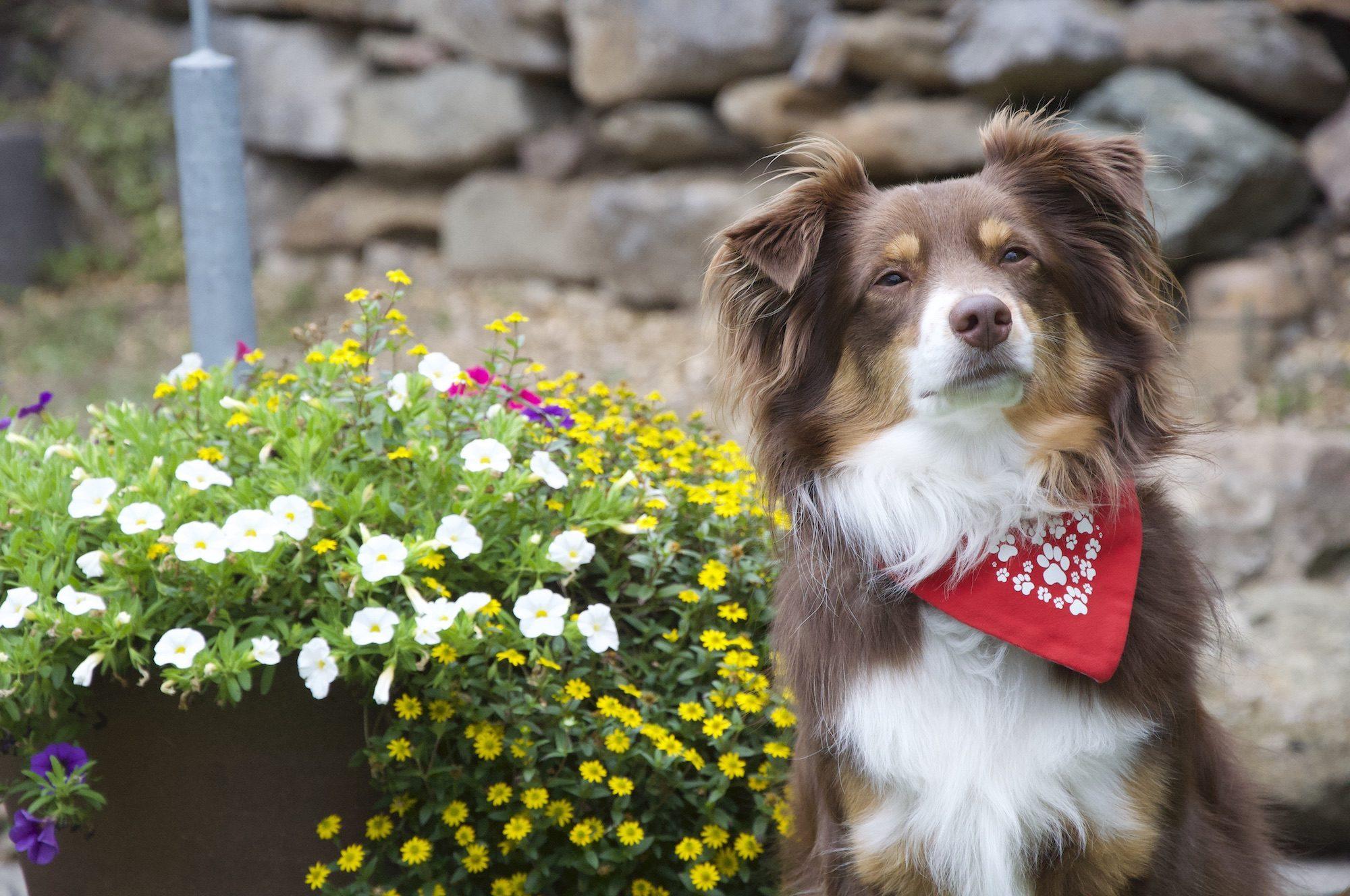 Therapiehund Fritz